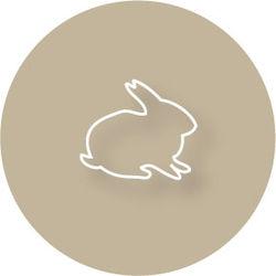 The-bunny