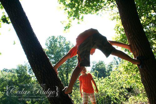 Owen tree climbing