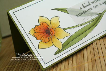 Daffodil coloring closeup