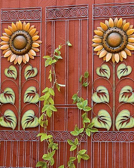 Sunflower trellises