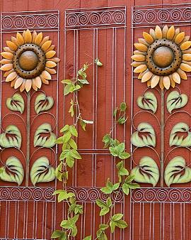 Sunflower trellises