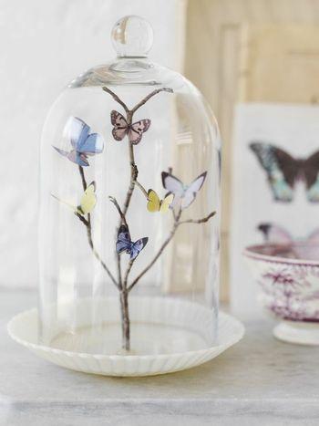 Butterflycloche